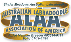 Shafer Meadows Australian Labradoodles ALAA International Logo