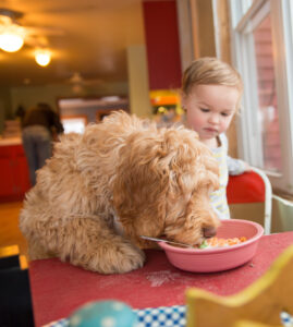 baby sharing breakfast with puppy